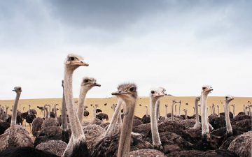 LGIC become First Company to launch Ostrich Insurance